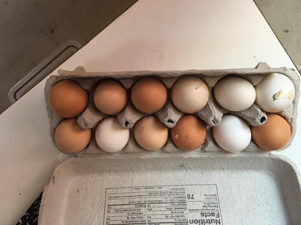 Name:  Owl Harbor eggs - Copy.JPG Views: 308 Size:  235.0 KB