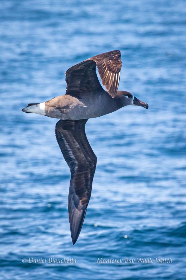 Name:  whalewatch4.jpg Views: 147 Size:  392.2 KB
