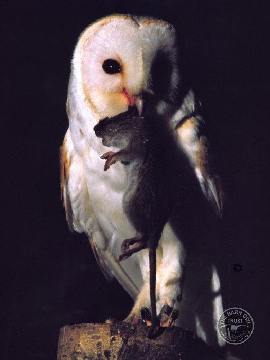 Name:  owl.jpg Views: 136 Size:  41.6 KB