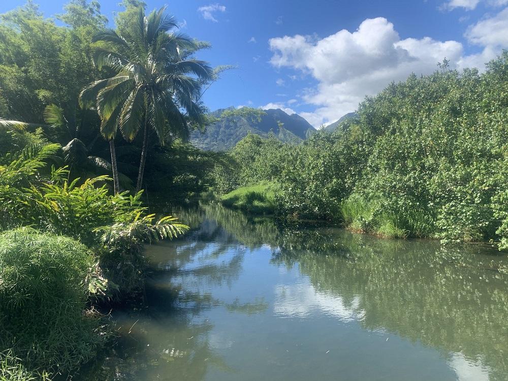 Name:  Hanalei River - Copy.jpg Views: 325 Size:  382.2 KB