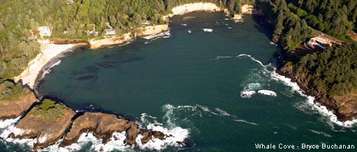 Name:  Whale Cove2.jpg Views: 150 Size:  38.8 KB