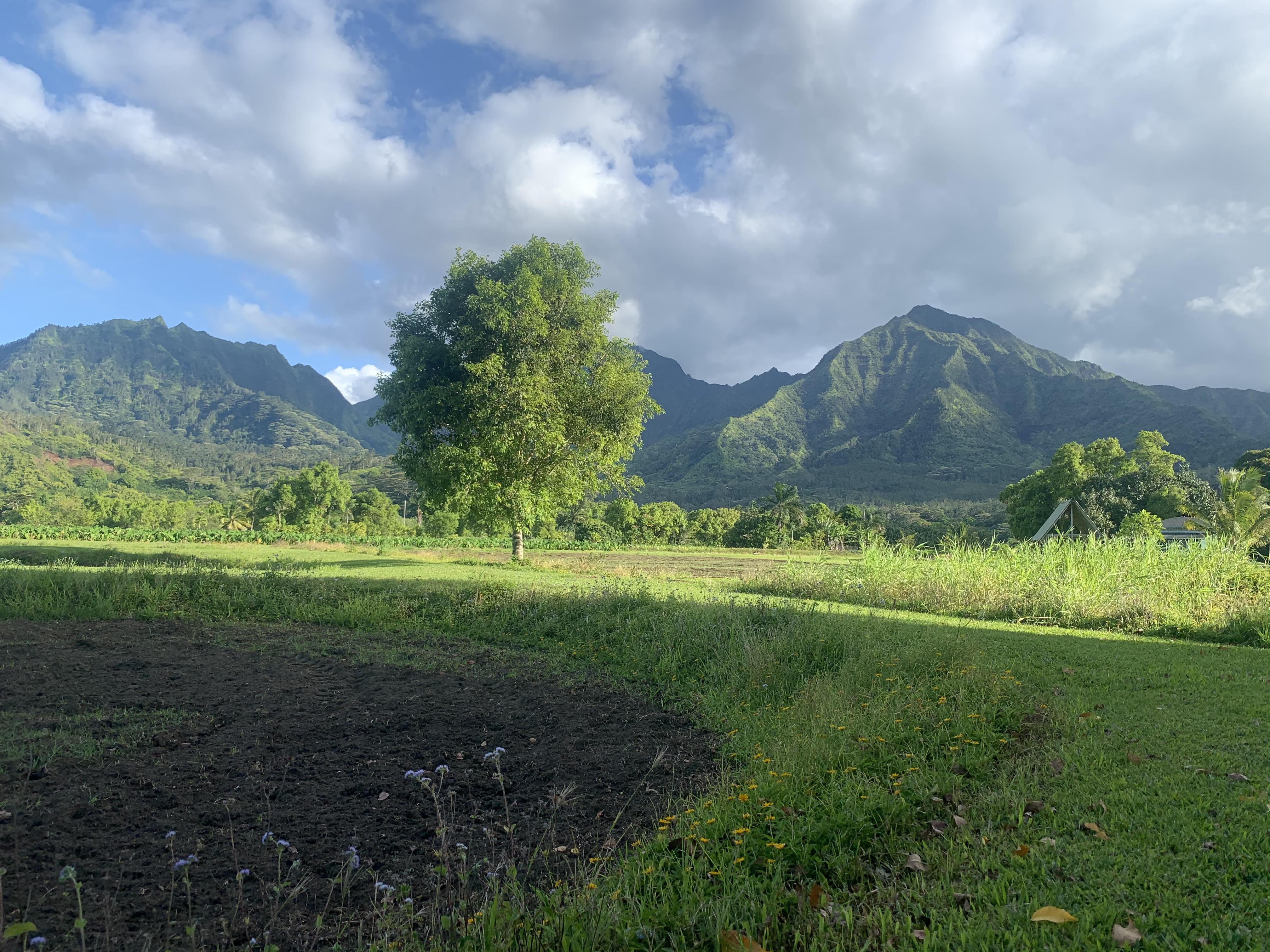 Name:  kauai today 062421.jpg Views: 758 Size:  1.51 MB