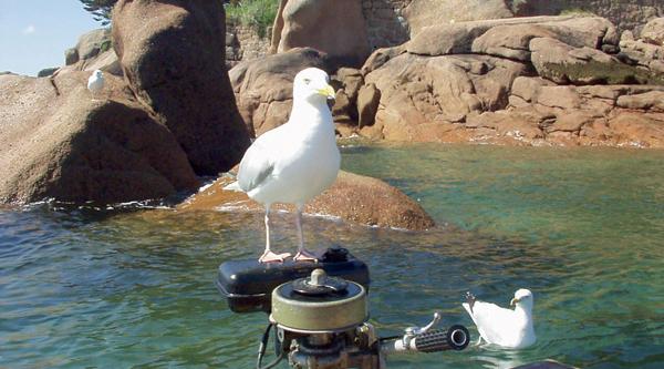 Name:  Seagull.jpg Views: 288 Size:  260.8 KB