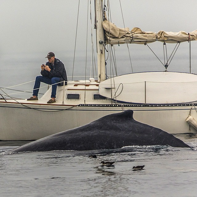 Name:  whale with phone guy.jpg