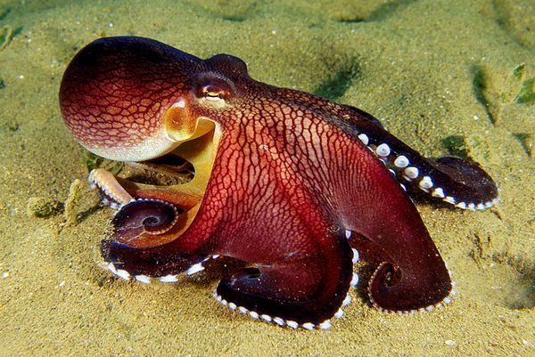Name:  octopus2.jpg