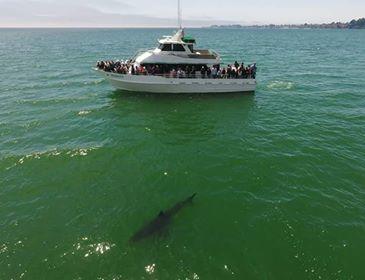 Name:  Shark.jpg Views: 165 Size:  16.2 KB