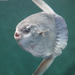 Name:  mola.jpg