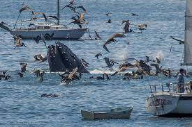 Name:  humpbacks.jpg Views: 298 Size:  11.3 KB