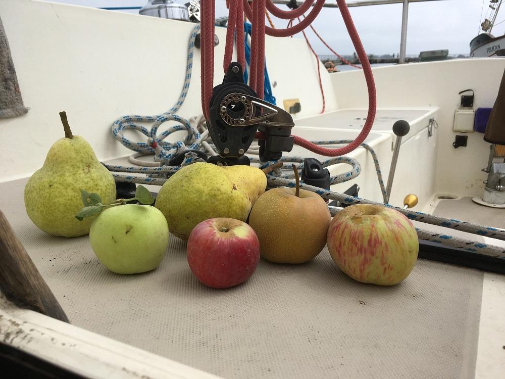 Name:  fruit.jpg Views: 89 Size:  247.5 KB